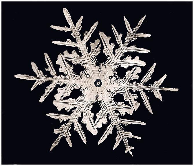 A Dendrite Star Snowflake, Smithsonian Institution Archives, Record Unit 31, Box 12, Folder 17, Negative no. 332