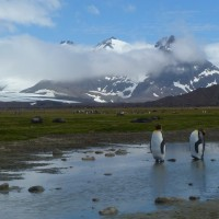 Penguin Counters Credit: Harriet Getzels