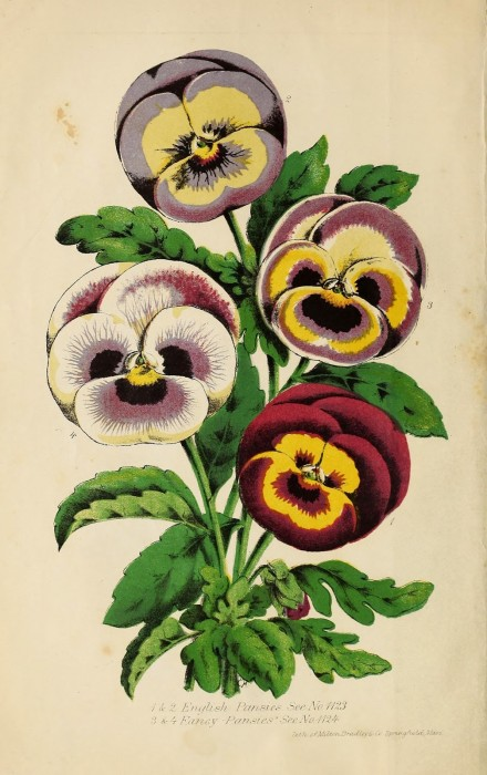B.K.Bliss is credited as the first to introduce color to the seed catalog in 1853. B.K. Bliss and Son's illustrated spring catalogue and amateur's guide to the flower and kitchen garden. 1870. http://biodiversitylibrary.org/page/44492905. Digitized by the USDA National Agricultural Library.