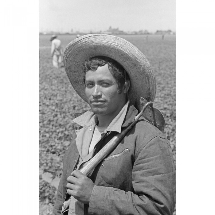 A bracero worker in a California lettuce field circa 1956. (Photo by Leonard Nadel, National Museum of American History)