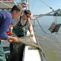 Former postdoc Eric Johnson (left) and SERC biologist Rob Aguilar trawl the Rhode River for blue crabs so that they can monitor their population and health. (Photo courtesy Smithsonian Environmental Research Center)