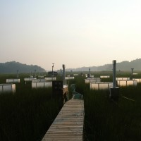 Scientists use chambers in SERC's Global Change Research Wetland, raising CO2 concentrations to twice that in the atmosphere to see how plants may react in the atmosphere of 2100. It is the world's longest-running field study on the effects of atmospheric CO2 on plant communities. (SERC photo)