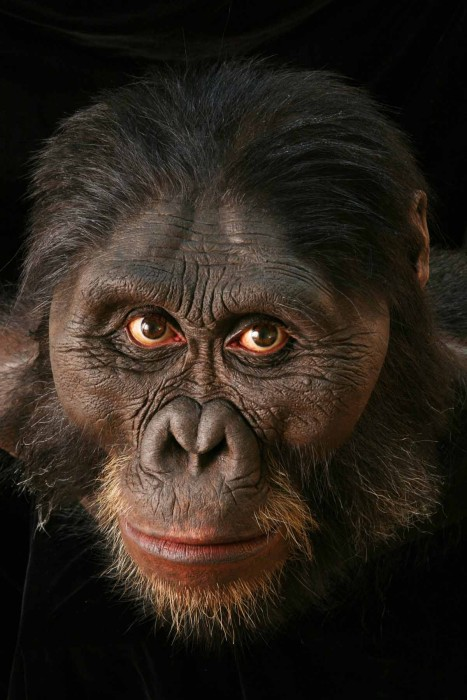 Australopithecus afarensis sculpture by John Gurche