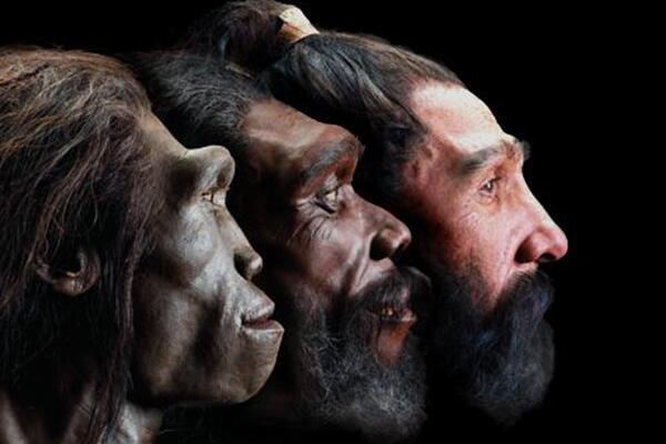 """""""Paleo-artist"""" John Gurche recreates the faces of our earliest ancestors, some of who have been extinct for millions of years. Gurche dissected the heads of modern humans and apes, mapping patterns of soft tissue and bone. He used this information to fill out the features of the fossils. Each sculpture starts with the cast of a fossilized skull; Gurche then adds layers of clay muscle, fat and skin. Seven of his finished hominid busts are featured at the National Museum of Natural History's David H. Koch Hall of Human Origins. They are perhaps the best-researched renderings of their kind. (Courtesy of John Gurche)"""