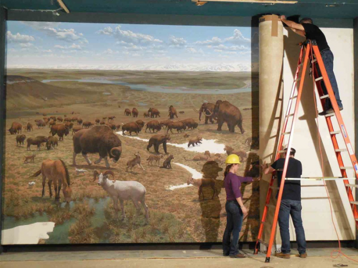 "A team of art conservators peels a mural off the wall in the Ice Ages Hall. This 1975 painting on canvas by paleoartist Jay Matternes depicts life on the tundra during the Pleistocene. It is part of a set of Matternes' murals that will be conserved and held in our collections for future use. (Photo via ""Digging the Fossil record,"" NMNH)"