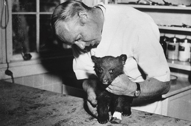 "A burned bear cub survived the Capitan Gap fire in New Mexico's Lincoln National Forest and was cared for by New Mexico Game Warden Ray Bell. The live cub, dubbed ""Smokey Bear,"" was donated to the National Zoo in Washington, D.C., where he remained until his death in 1976. (Image via National Historical Publications and Records Administration, National Archives)"