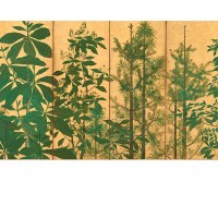 """Trees. By the artist of the """"Inen"""" seal; Japan, Edo period, mid-17th century; Pair of screens (six panel); ink, color and gold on paper; H x W: 154 x 357.8 cm (60 5/8 x 140 7/8 in); Purchase, F1962.30-31; Freer Gallery of Art, Smithsonian"""