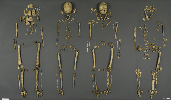 The bones were poorly preserved, with only about 30 percent of each skeleton recovered, but the Smithsonian's research team determined the sex, age at death, diet and presence of heavy metals for each individual. In July 2015, a team of scientists from the Smithsonian's National Museum of Natural History and Jamestown Rediscovery announced the identities of Rev. Robert Hunt, Capt. Gabriel Archer, Sir Ferdinando Wainman and Capt. William West, high-status leaders who helped shape the future of America during the initial phase of the Jamestown colony. (Photo by James Di Loreto / Smithsonian Institution)
