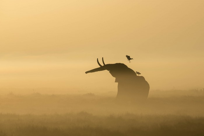 © Stuart Porter / Nature's Best Photography Awards. Courtesy of Smithsonian's National Museum of Natural History.