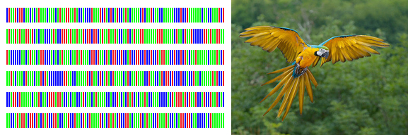 DNA barcodes consist of a standardized short sequence of DNA (400-800 bp) that in principle should be easily generated and characterized for all species on the planet. The Blue and Yellow Macaw's barcode is reflected above with greens, reds, and blues representing the nucleotide bases. Image of Ara ararauna, the Blue and Yellow Macaw by Luc Viatour and courtesy of the Encyclopedia of Life. Image of Blue and Yellow Macaw barcode courtesy of CBOL.