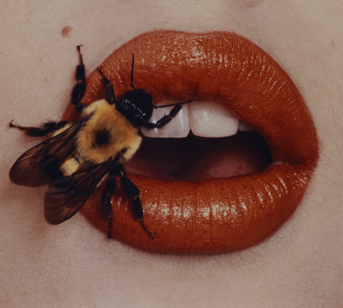 Irving Penn, Bee, New York, 1995, printed 2001, Smithsonian American Art Museum, Promised Gift of The Irving Penn Foundation. Copyright © The Irving Penn Foundation
