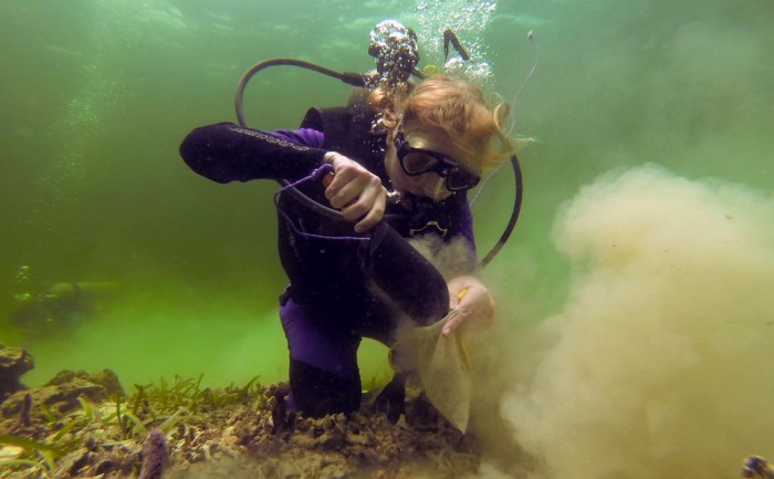 Diving deep brings rewards for STRI researchers