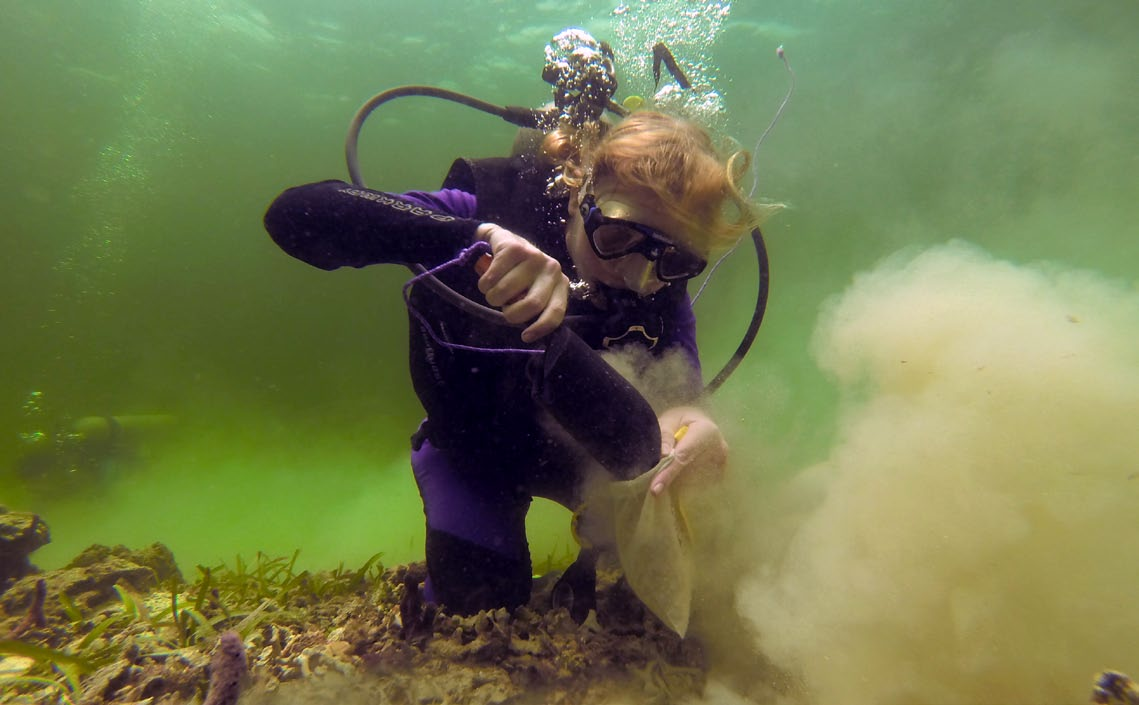 Erin Dillon collects sediment samples from a reef at Boca del Toro, Panama. (Photo by Sean Mattson)