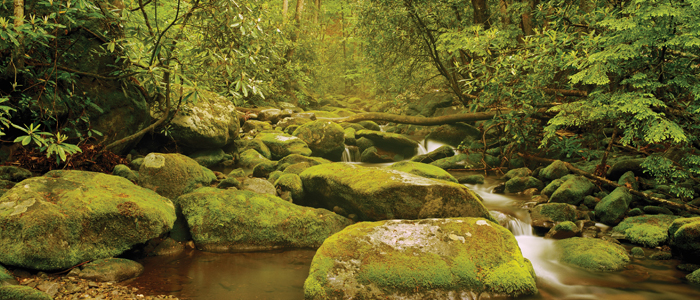 stream with moss covered rocks