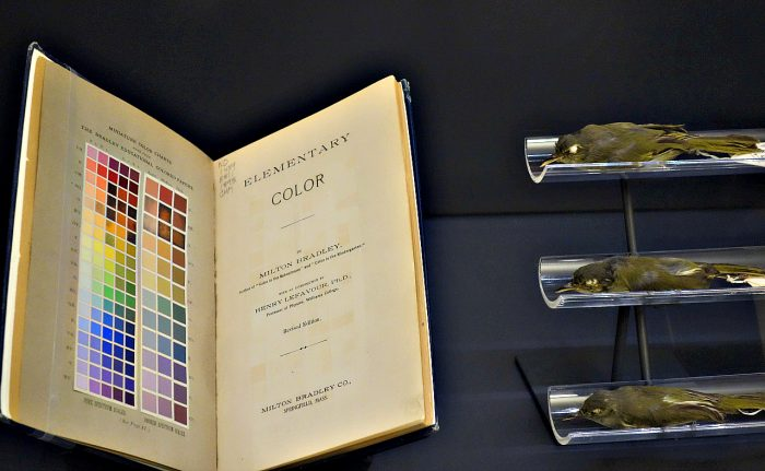 Book with color samples next to taxidermy birds