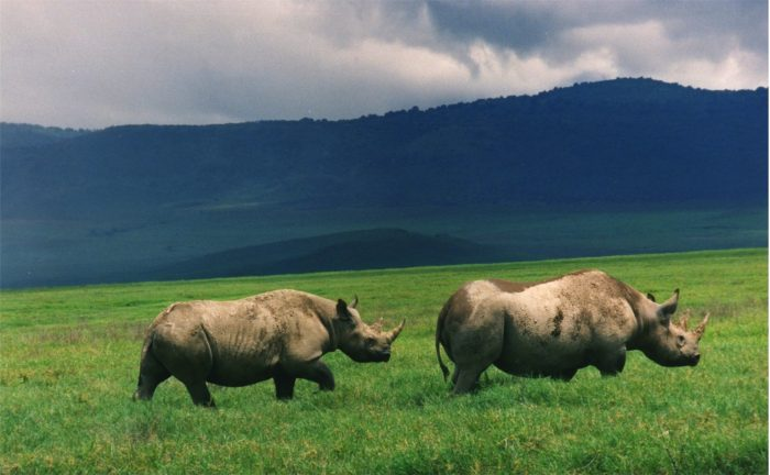 Two rhinos on green plain with mountains in background