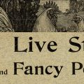 composite banner of Burpee catalog featuring fancy poultry