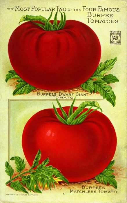 colorful ad featuring red tomatoes