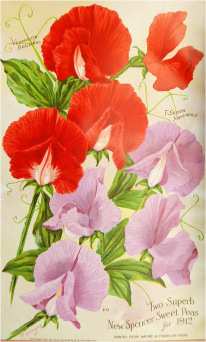 colorful ad featuring sweet pea flowers