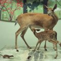 Taxidermy deer with mouse and weasel