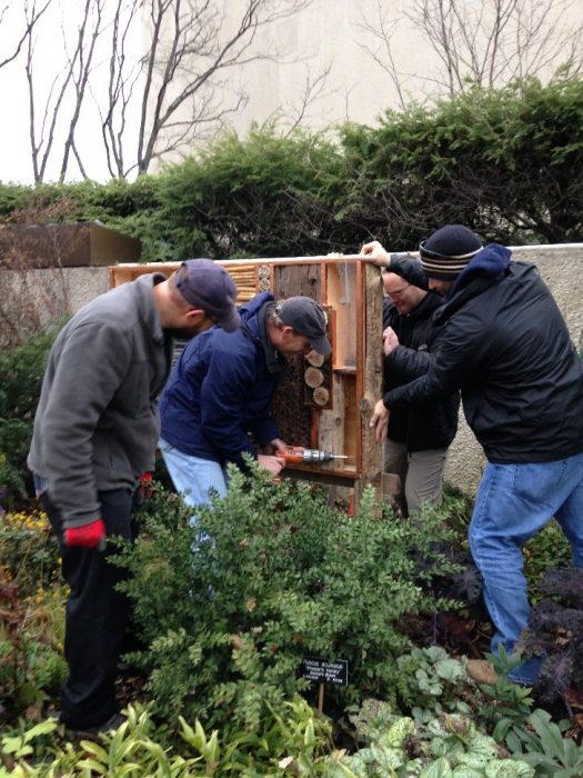 Four men, one with drill installing insect habitat