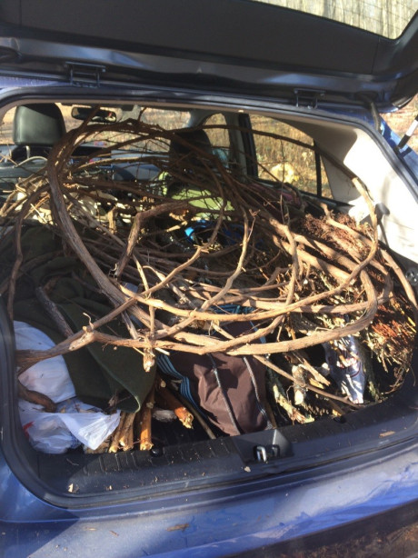Back of car filled with branches and vies