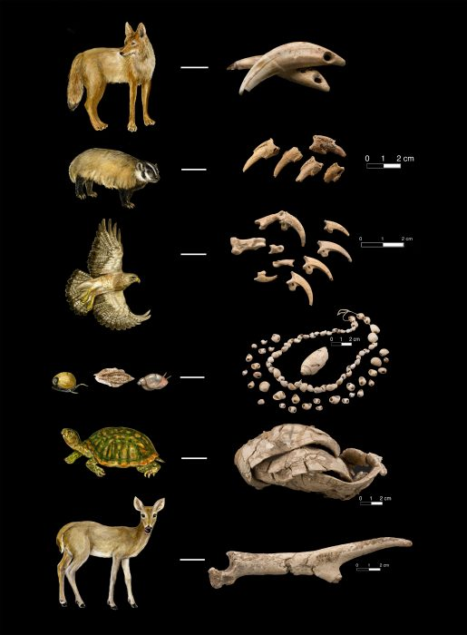 photos of animals and shells