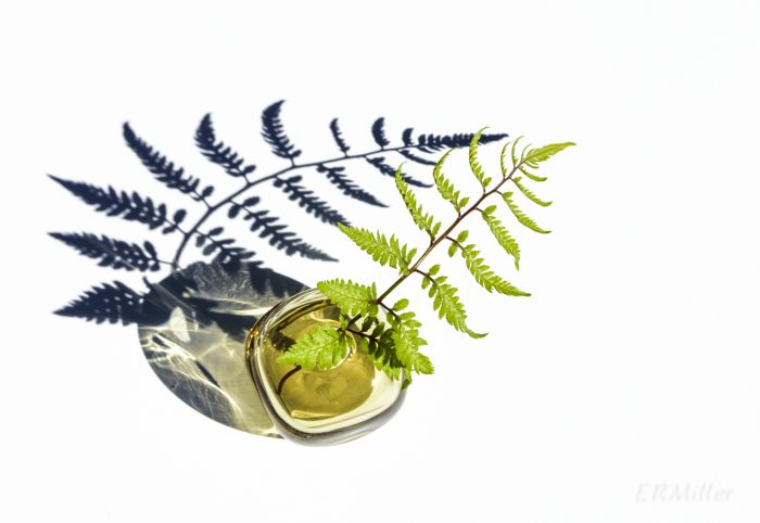 enhanced photo of fern frond in jar