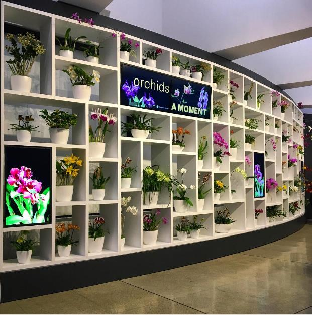 Orchids on display at Hirshhorn