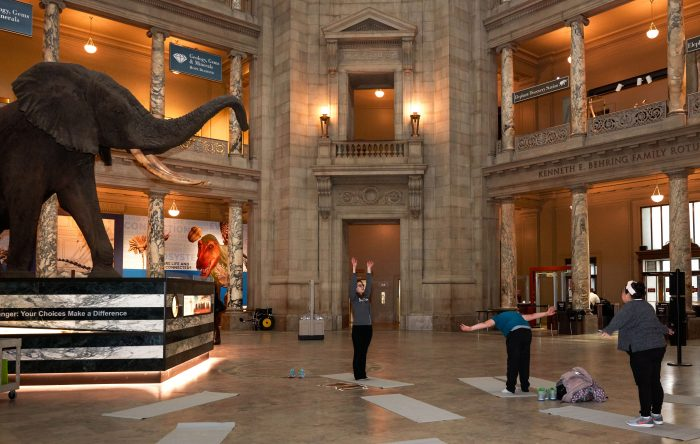 Yoga in the rotunda of the Natural History Museum