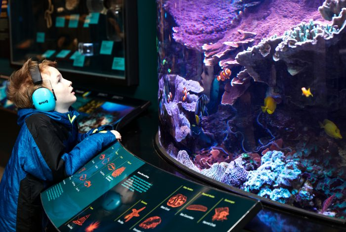 Child watches fish in aquarium