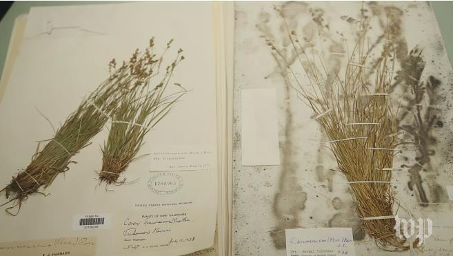Screenshot from video of plant specimen