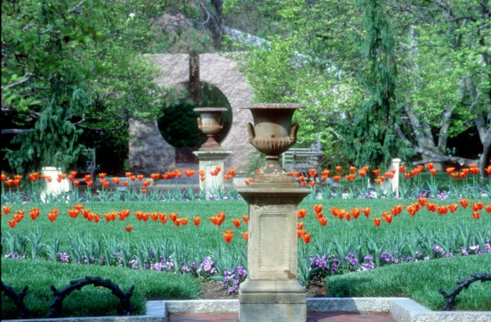 View of garden with tulips