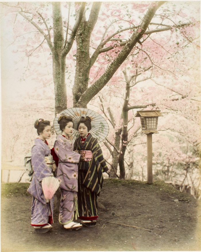 A walk among the cherry blossoms
