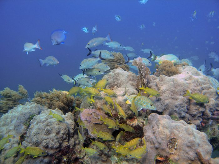 Coral reef and parrotfish.