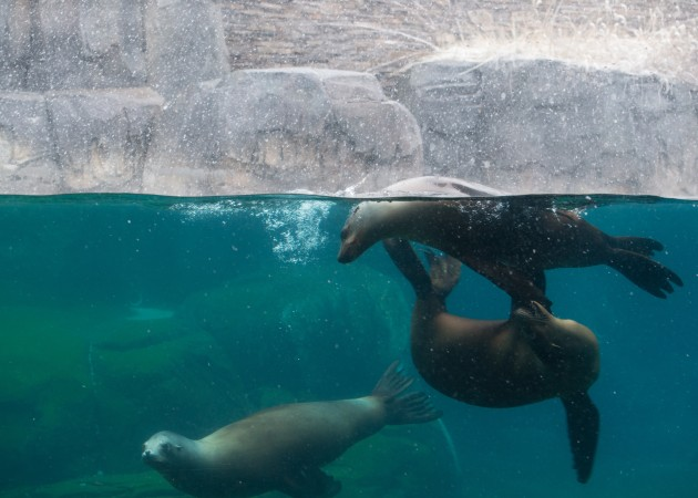 sea lions in pool
