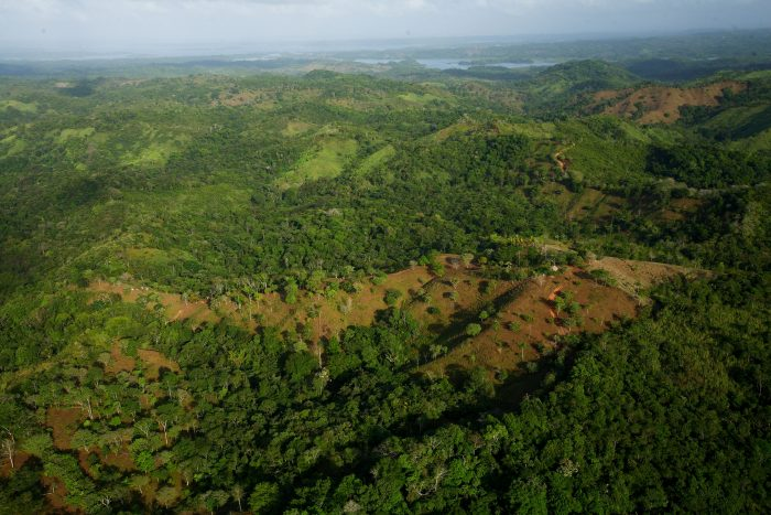 Aerial view of second growth forest with bare spots