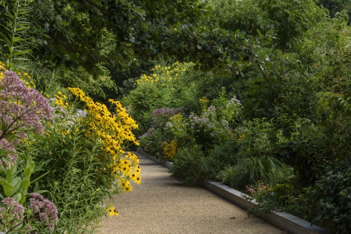 Pathway lined with blooming daisies and other flowers