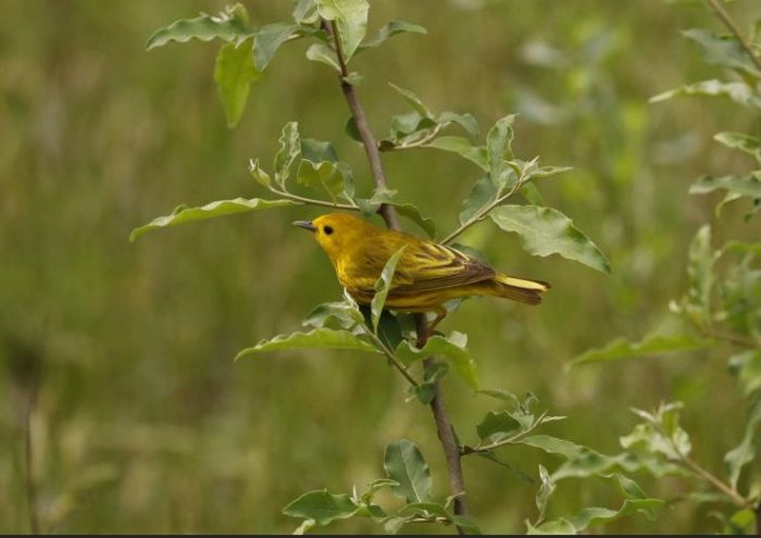 yellowish-brown bird perched on branch