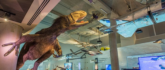 Affiliate Spotlight: Phillip and Patricia Frost Museum of Science