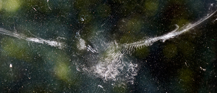 Imprint on glass of bird striking window in flight