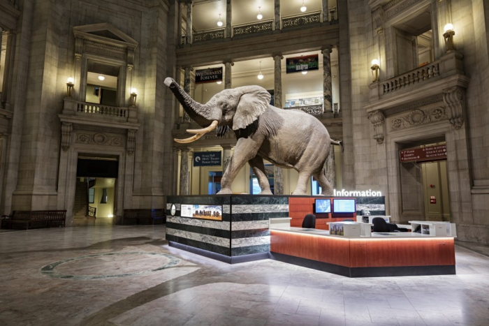 Henry the elephant in rotunda