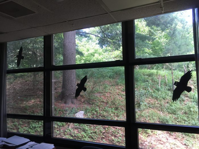 Window with owl silhouettes