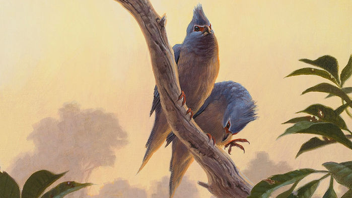 Painting of crested birds with blue feathers
