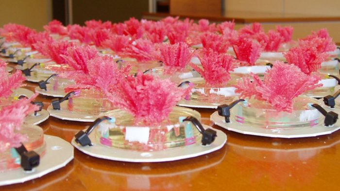 Bright pink coralline on dishes