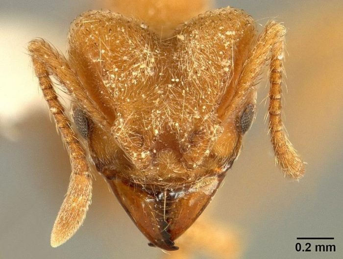Close up of ant's head