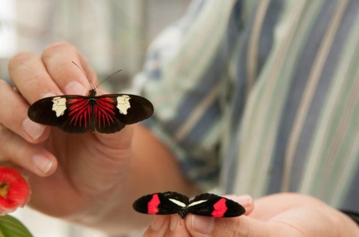 Two butterflies with different black and red markings