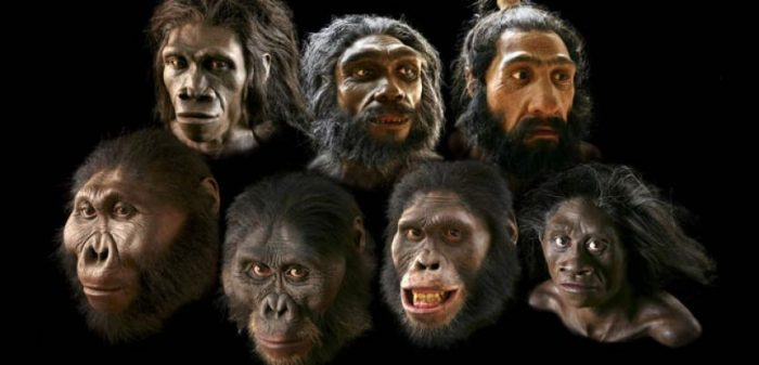 composite photo of early hominid faces