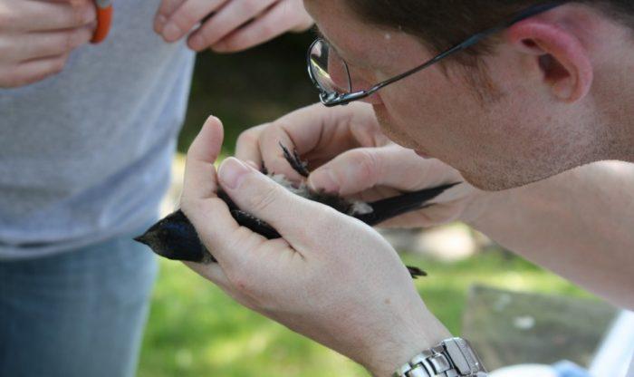 Close up of man holding bird