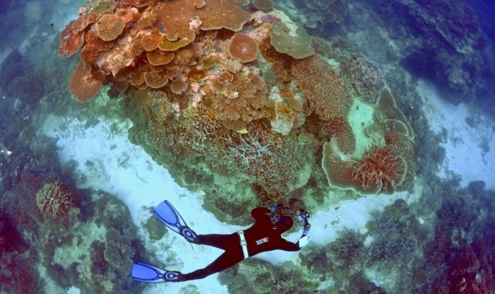 Diver swims above coral reef